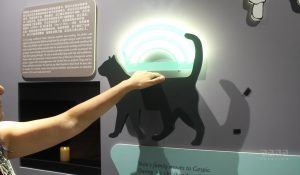 CAT Installation With Motion Sensor